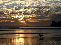 Dog on Beach at Sunset