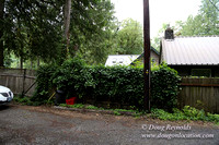 Small, Cabin, Home, River, OR, Oregon, Green, Yard,